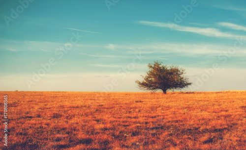 In de dag Oranje eclat Lonely tree on yellow meadow an mountain landscape with clouds. Autumn bright background.
