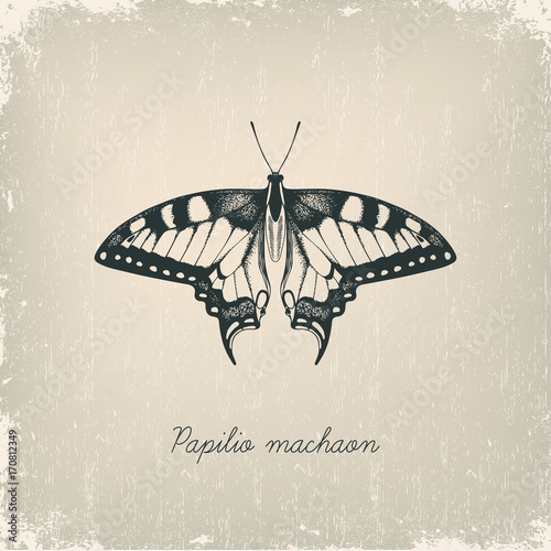 Foto op Canvas Vlinders in Grunge Machaon butterfly. Hand drawn vector illustration.