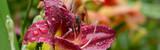 Blumen 852