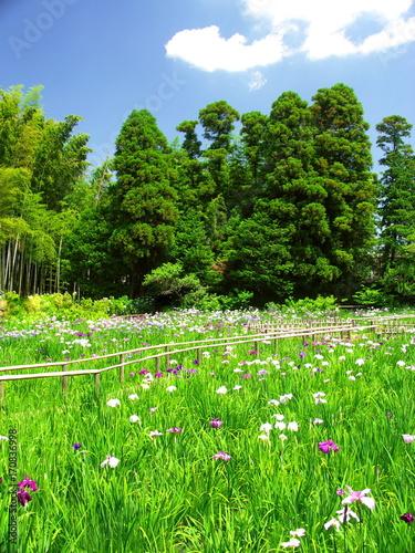 Aluminium Iris 林と竹林と菖蒲園