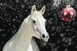 canvas print picture - Weisses Pferd vor Weihnachtskugel