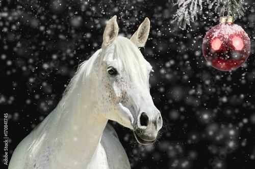 canvas print picture Weisses Pferd vor Weihnachtskugel
