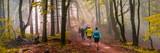 Fototapety Joggen im Herbst, stimmungsvolles Waldpanorama