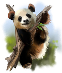 The giant Panda on the tree watercolor painting