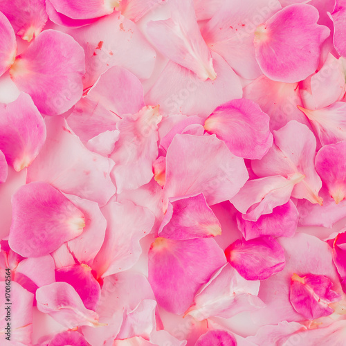 Pattern of pink rose petals. Valentine's day concept. Flat lay, top view - 170862564