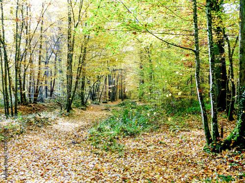 Papiers peints Route dans la forêt Chemin dans une forêt à l'automne