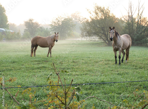 Horses in Pasture at Sunrise