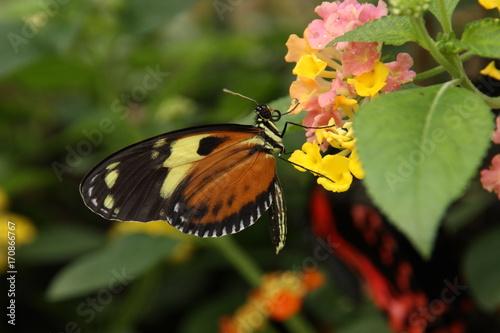 Keuken foto achterwand Vlinders in Grunge butterfly 3
