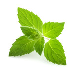 mint leaves isolated - 170881175