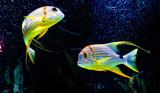 물고기 - 170884110
