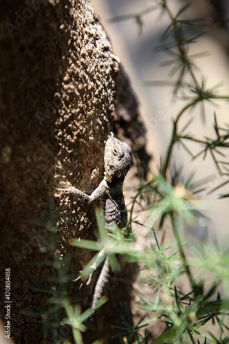 Fotobehang Kameleon Gekko, Eidechse, Agame am Baumstamm