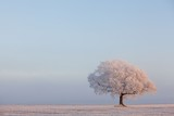 bereifter Baum auf einer Weide - 170903596