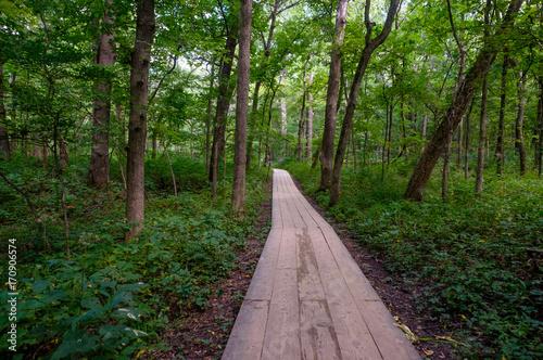 Fotobehang Weg in bos pathway through the forest