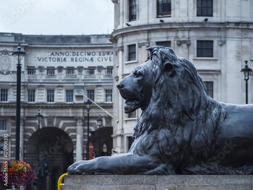 The famous lions at Trafalgar Square London
