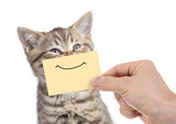 funny happy young cat portrait with smile on yellow cardboard isolated on white - 170910377