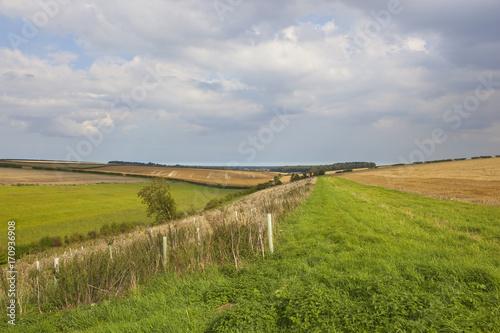 Fotobehang Bleke violet arable fields and plantation