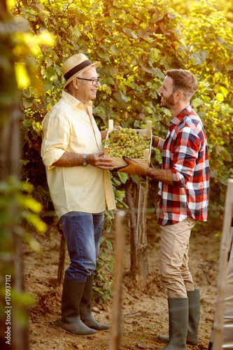 vineyard family tradition - happy father and son looking at grapes.