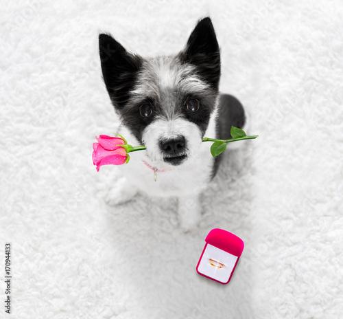 Fotobehang Crazy dog wedding proposal dog with marraige ring