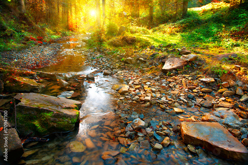 Autumn scene. Mountain spring, forest landscape - 170947100