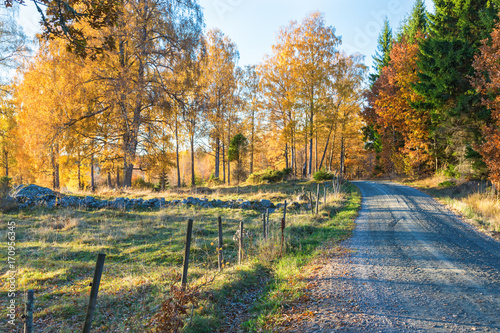 Fotobehang Herfst Dirt road along a meadow with autumn colors