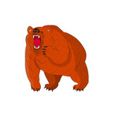 Angry grizzly bear (brown) growls, cartoon on white background.