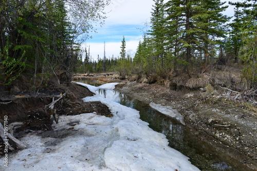 Papiers peints Rivière de la forêt Trip to Alaska, USA