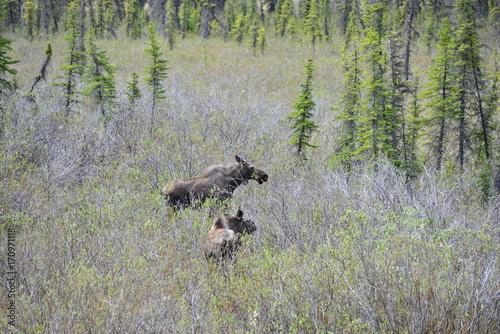 Trip to Alaska, USA Poster