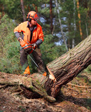 The Lumberjack working in a forest. Harvest of timber. Firewood as a renewable energy source. Agriculture and forestry theme. People at work.  - 170980999