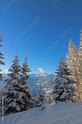Aluminium Betoverde Bos Schneebedeckte Tannen in den Bergen, nahe Zell am Ziller in den Alpen in Österreich