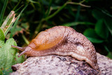 A large slug on the ...