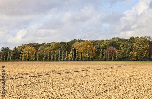 Plain Autumn Landscape