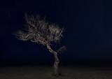 Albero spoglio con cielo stellato - notte - 171011562
