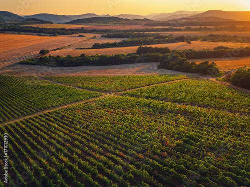 Fotobehang Natuur Beautiful Sunset over vineyard fields in Europe