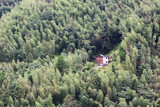 Rustic old house surrounded by forest. - 171019720