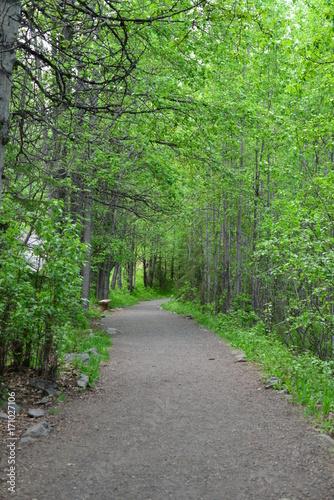Papiers peints Route dans la forêt Trip to Alaska, USA