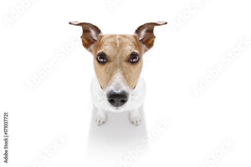 Fotobehang Crazy dog close up curious dog view
