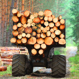 Lumberjack with modern harvester working in a forest. Wood as a source renewable energy.  - 171039549