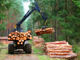 Lumberjack with modern harvester working in a forest. Wood as a source renewable energy.  - 171039735