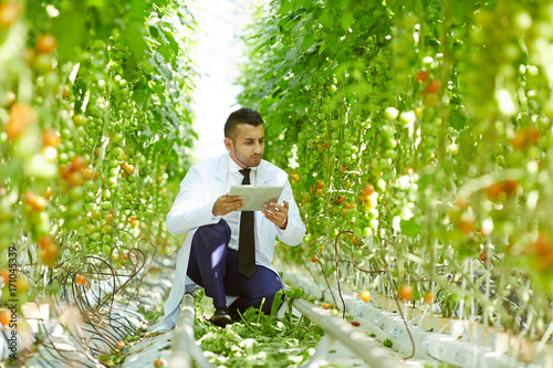 Confident young scientist with digital tablet in hands sitting on haunches while checking quality of tomato plants at modern greenhouse