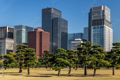 Fotobehang Tokio Pine trees on background of modern office buildings in Park, Tokyo, Japan.Autumn in a garden in the center of Tokyo