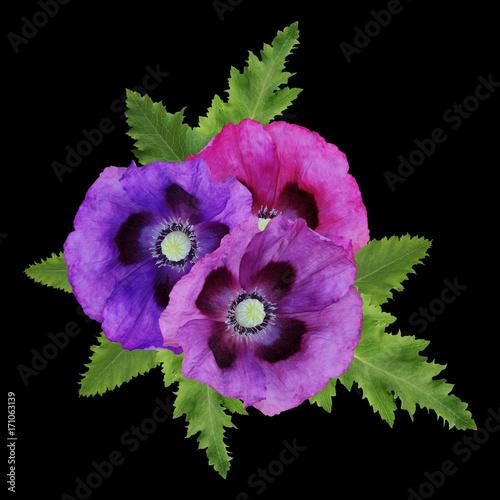 Foto op Plexiglas Klaprozen Three decorative poppies