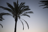 Palms at sunset - 171063590