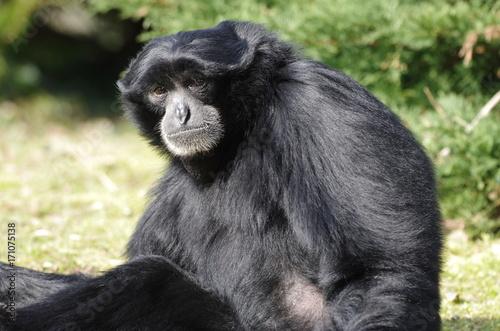Aluminium Aap Gibbon noir