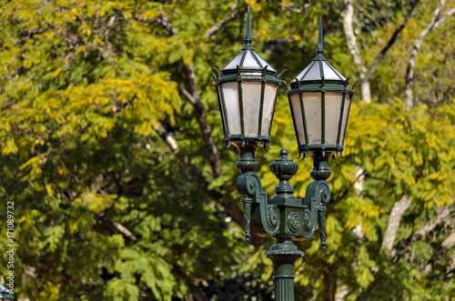 Papiers peints Buenos Aires Light in trees