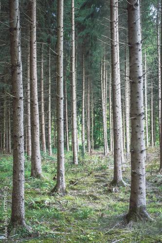 Fotobehang Khaki Wald aufforsten