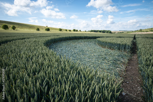 Foto op Canvas UFO Crop circle at East Kennett, Wiltshire, England, viewed at ground level