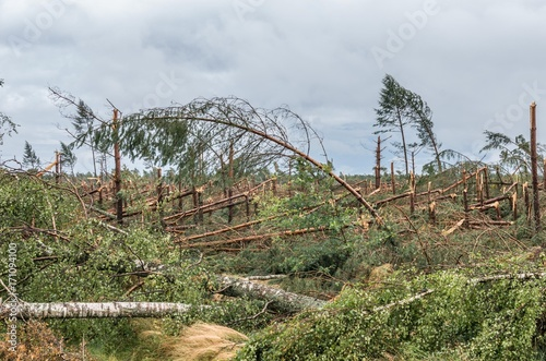 Forest destroyed by the hurricane wind in Poland, on September 12, 2017