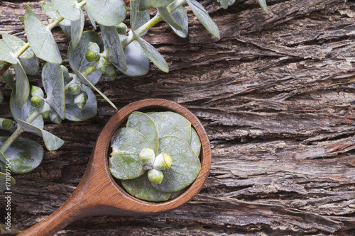 Aluminium Spa oil and eucalyptus holas, The essential oil of eucalyptus leaves is used as a nasal decongestant and to combat respiratory infections
