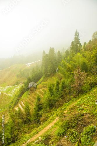 Fotobehang Pistache The terraces landscape, countryside