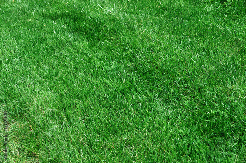 Foto op Plexiglas Groene real green grass background